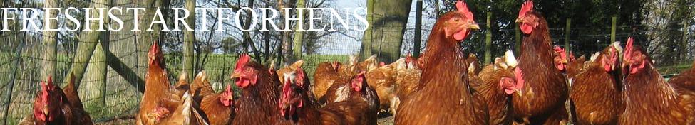 Fresh Start For Hens